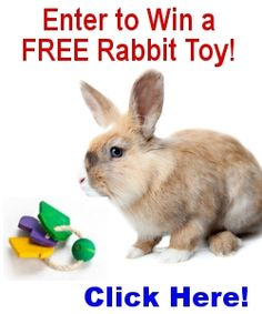 5 Rabbit Toys Given Away every week!