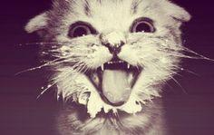 забавный котёнок в сметанке <3