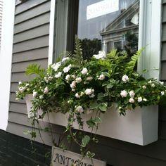 Nantucket window box.2