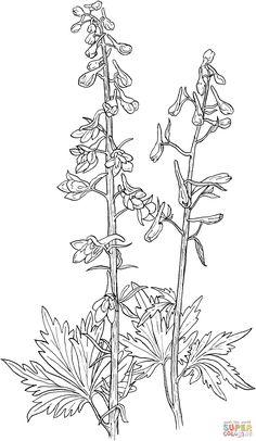 Delphinium Elongatum or Tall Larkspur | Super Coloring