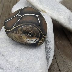 Animal paintend rock stone tortoise rock stone Painted stone