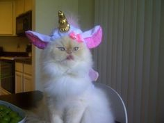 In fact, there are only two cats who seem to enjoy being a Caticorn...