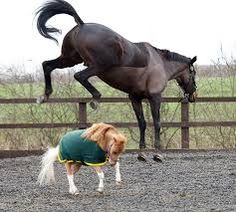Bildergebnis für american mini horses : Disco fever...Für diese drolligen Minis gibts jetzt einen Heu-To-Go mit Spezialbehältern..:)