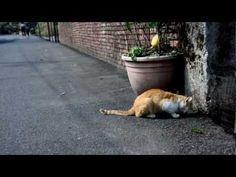侯硐:尋貓趣