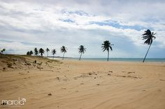 Conheça a Praia de Cumbuco no Ceará