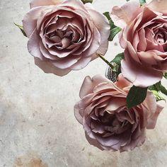 """Mi piace"": 222, commenti: 5 - BOTANICA (@botanicafreshflowers) su Instagram: ""I'll make this the last post of these ♡"""