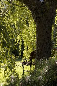 A seat under an old willow ❤•♥.•:*´¨`*:•♥•❤ turning the air green.