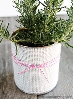 How to Turn a Can into a Giftable Planter: ~ Creative Green Living