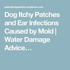 Dog Itchy Patches and Ear Infections Caused by Mold | Water Damage Advice…