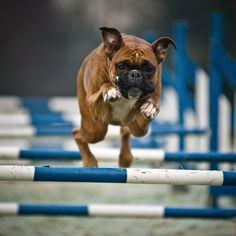 I freaking love Boxers so muchhhhh.