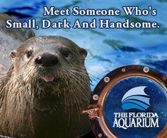 Visit The Florida Aquarium in Tampa!