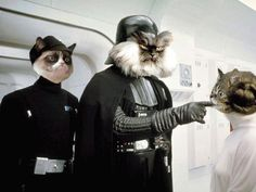 Tard the Grumpy Cat as an Imperial Officer, Colonel Meow as Darth Vader, Lil Bub as Princess Leia Funny Cats, Funny Animals, Cute Animals, Animal Funnies, Grumpy Cat, Starwars, Dark Vader, Angry Cat, Star Wars Humor