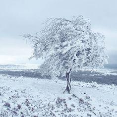 After the rain came the snow. Temperatures dropped and over night the Golan Heights turned into a winter wonderland. . . . . .  #snowday #winterwonderland #golanheights #moodygrams #afternoonwalk  #modernoutdoors #israel #travelisrael  #goexplore #travelblogger #travelphotography #travelgram #travel #nomad #travelawesome #travelling #wanderlust #travelbug #travelmore #instatravel  #EyeEm #traveletting #travelstoke #minimalisttraveler #welltravelled #passionpassport #solotravel…