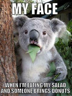 A Koala Pun Shocked