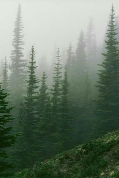 Misty forest in the Olympic Mountains, Washington by Trevor Ducken. Beautiful World, Beautiful Places, Olympic Mountains, Foggy Mountains, Pine Forest, Misty Forest, Conifer Forest, Foggy Forest, Forest Mountain