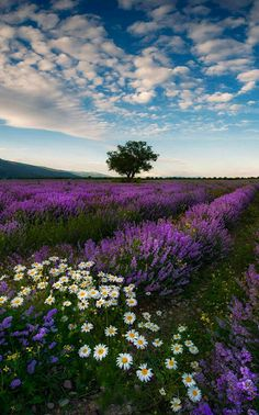 New Nature Pictures Flowers Fields Ideas Lavender Fields, Lavender Flowers, Wild Flowers, Purple Flowers, Nature Pictures Flowers, Nature Photos, Beautiful World, Beautiful Images, Beautiful Flowers Pics