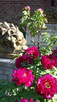 A lion and some pink flowers,  2016