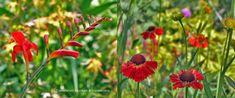 Natuurlijke bloementuin