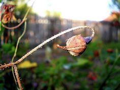 Autumn feels by Ellie Oprea Autumn Photography, Fine Art America, Feelings, Pictures, Fall Photography, Resim, Fall Photos, Clip Art