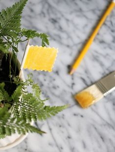 Make your own sticky traps to catch those tiny black bugs—they're fungus gnats—that buzz in the air above houseplants. Cover a yellow (or other brightly colored) card with a thin layer of honey.  Attach the card to a toothpick and place in the surface of the plant soil. After the card begins to host tiny black insects, dispose of it and start fresh.