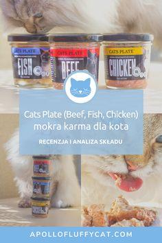Przetestowaliśmy trzy pierwsze smaki polskiej karmy dla kotów Cats Plate, które niedawno zadebiutowały na rynku. Karmy są niebanalne, bo zapakowane w szklane słoiczki i zawierają naturalne źródła pierwiastków. Jak karma wypada po dogłębnej analizie? Karma, Fluffy Cat, Apollo, Beef, Plates, Fish, Chicken, Meat, Licence Plates