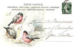 postcard birds 2
