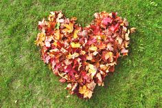 october-glory:    tell me how much you love fall, or your favorite part, and pass it on? :)