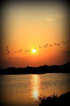 Sunset Over Merrit Island National Refuge