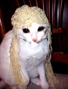 Anyone wanna rp? Cat And Dog Memes, Cute Cat Memes, Funny Animal Memes, Cute Funny Animals, I Love Cats, Crazy Cats, Cool Cats, Funny Cat Faces, Funny Cats