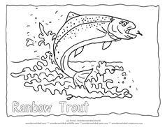 """Rainbow Trout Picture to Color 4 Rainbow Trout Coloring Page  with Trout Outline Pictures , Rainbow fish with outline font of the word """" Rainbow Trout"""" added Fisch Ausmalbilder, Kostenlose malvorlagen mit Fish Bildern , Tierbilder zum Herunterladen fuer Kinder Fische , Fischen Forelle Bild , Ausmalbilder mit Forellen zum Fischen"""