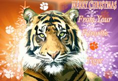 Items similar to Favorite Tiger Christmas Card on Etsy Christmas Greeting Cards, Christmas Greetings, Tiger Paw, Clemson Tigers, Orange And Purple, Pet Portraits, Animals Beautiful, Christmas Wreaths, Character