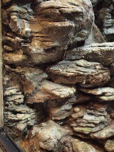 Click the image to open in full size. Reptile House, Reptile Room, Reptile Cage, Gecko Terrarium, Reptile Terrarium, Tarantula Enclosure, Reptile Enclosure, Diy Aquarium, Aquarium Decorations