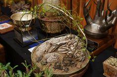 https://flic.kr/p/Ndeq8Q | Dioscoria hemicrypta - CSSA 2014.JPG