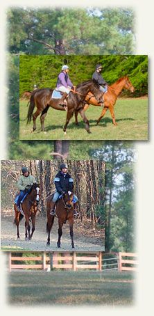 Camden Training Center, Camden, SC Heart Land, Training Center, Thoroughbred, Camden, Horse Racing, Farms, Places Ive Been, To Go, Horses