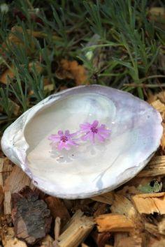 Use a shell to make a fairy garden pool.  Splish splash! #fairygardening