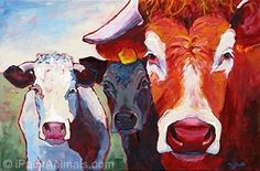 Irish cows by Tod C Steele