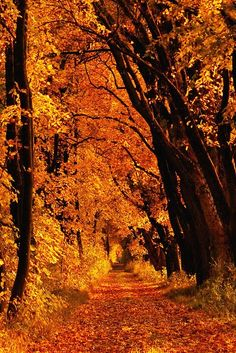 ~Quote:  I want to walk along this quiet path, and dream a dream or two, I want to stroll along this lane, and think of me and you~