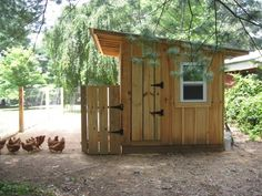 """This our brand new coop my husband built. We just love it!So do our 22 """"girls"""". My husband..."""