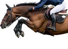 Introduction to the Globe Rider Games - Equestrian Best Tips Equestrian Boots, Equestrian Outfits, Equestrian Style, Equestrian Fashion, Show Jumping, Horse Riding, Horseback Riding, Beautiful Horses, Riding Helmets