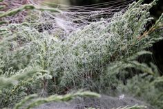 #ground frost #makro #spider #web