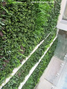Exterior Artificial Green Wall Designed, Manufactured and Installed in an exterior lightwell - 25 sq metres
