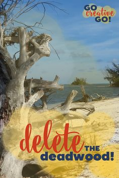 Summer Streamline: Deleting The Deadwood! As I continue my summer streamline of my brand and my business, I'm intent upon deleting as much deadwood as necessary, from clients to connections.