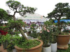 Bonsai, Thang Long Rose Park in Ha Noi, Vietnam economy, Vietnamnet bridge, English news about Vietnam, Vietnam news, news about Vietnam, English news, Vietnamnet news, latest news on Vietnam, Vietnam