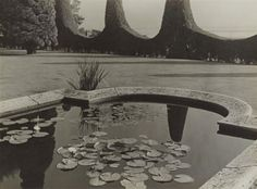 Albert Renger-Patzsch THE WATER LILY POND IN THE WARBURG FAMILY PARK, HAMBURG-BLANKENESE, 1928