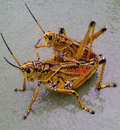 CRICKETS! ONE OF MY FAVORITES!