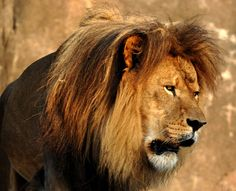 King of the Jungle by Rockyrosa, via Flickr