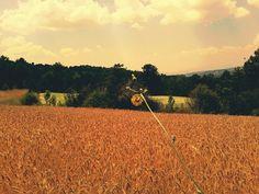 Field in yellow
