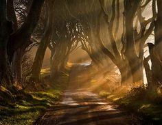 Living tunnel...