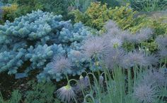 Composing with Conifers | Fine Gardening