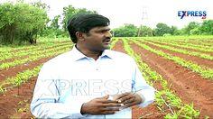 Successful Ginger Farming by Nageswar Reddy, Zahirabad | Paadi Pantalu -...